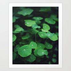 Shades of Green Art Print