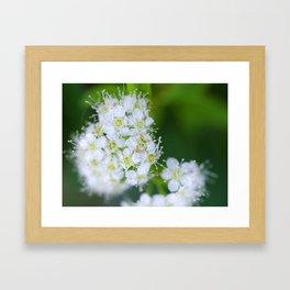 Bunches of White Framed Art Print