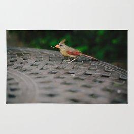 Female Cardinal // Ohio Rug