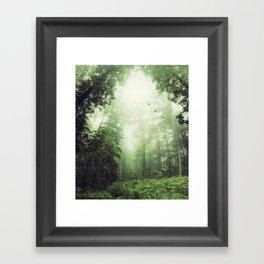 German Jungle - Forest in Morning Mist Framed Art Print