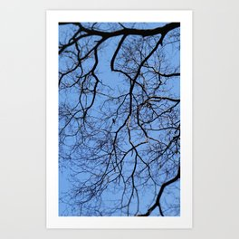 Bird in the Tree Art Print