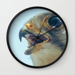 Common Kestrel Portrait Beak Wide Open (Falco tinnunculus) European kestrel. Wall Clock