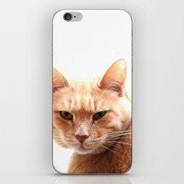 Red cat watching iPhone Skin
