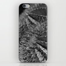 Catcus iPhone & iPod Skin
