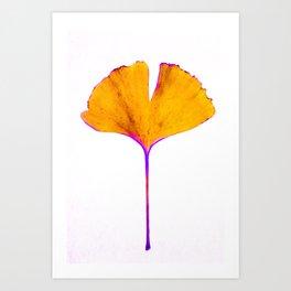 ginkgo biloba leaf Art Print