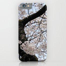 Sakura Blooming (Japan) iPhone Case