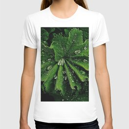 Dew On Rose Scented Geranium Leaves T-shirt