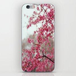 Cherry Lover / Sakura / Japanese cherry blossom / Cherry Blossom iPhone Skin