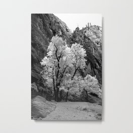 Black and White Fall Colors in Zion National Park Metal Print