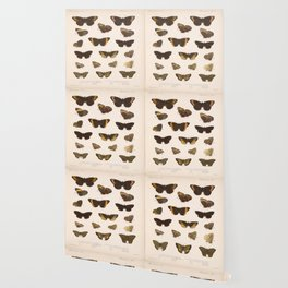 Vintage Scientific Hand Drawn Illustration Anatomy Of Butterfly Insect Patterns Biology Art Wallpaper