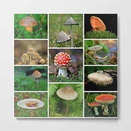 Mushrooms Collage - Cafe or Kitchen Decor Metal Print