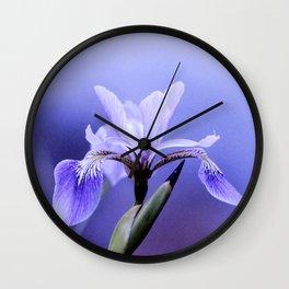 The Blue Flag Iris, full blue bloom Wall Clock