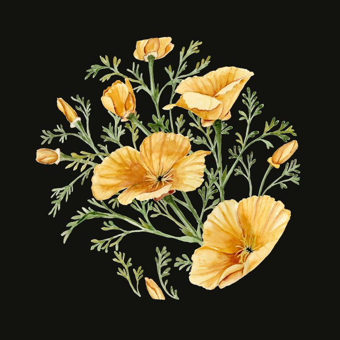 California Poppies on Charcoal Black Duvet Cover
