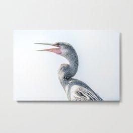 Snake Bird: Anhinga Metal Print