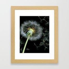 Dandelion Seeds Blowing in the Wind, Scanography Framed Art Print