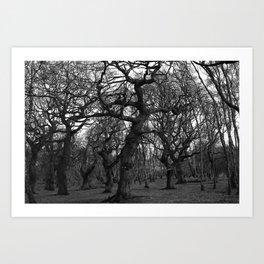 Oak Trees on the March Art Print