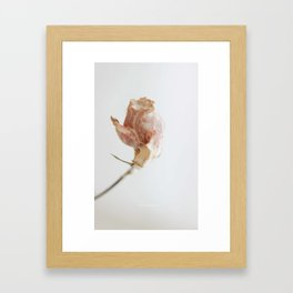 Single Rose Framed Art Print