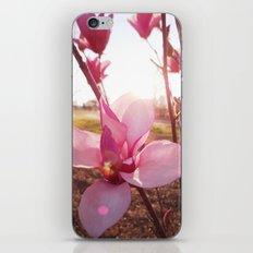 Sun Lit iPhone & iPod Skin