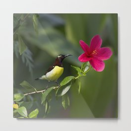 Purple Sunbrid Metal Print