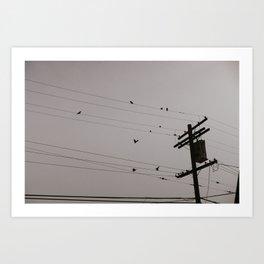 Parrots in Culver City Art Print