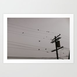 Parrots in Culver City Art Print