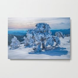 Winter Morning in Field Metal Print