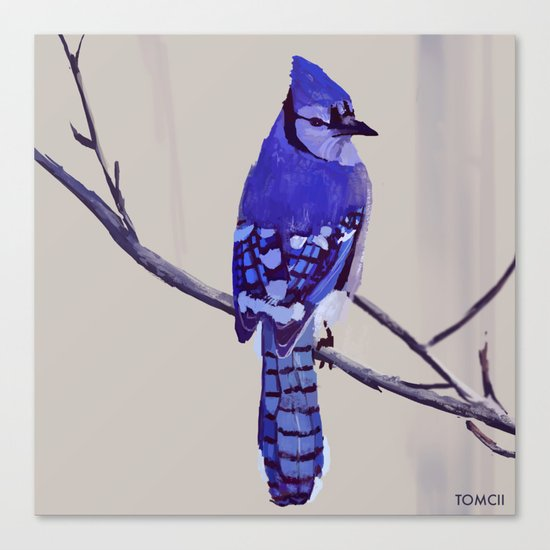 Blue Jay Bird by tomcii
