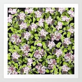 Apple Blossoms, Spring Flower, Springtime, Floral, Botanical, Pink Flowers Art Print