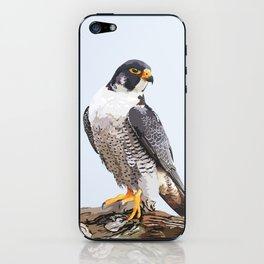Majestic: Peregrine Falcon iPhone Skin