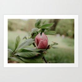 Magnolia Flower 2 Art Print