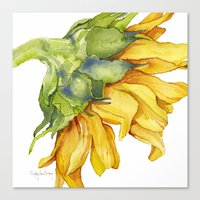 sunflower Canvas Prints featuring Sunflower by Cindy Lou Bailey