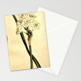 Flower 1298 narcissus orientalis Pale cupped white Garden Narcissus10 Stationery Cards