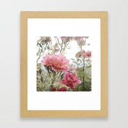 Sandia Roses Framed Art Print