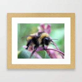 BR Bee Framed Art Print