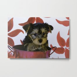 Yorkie Puppy Sitting in a Red Christmas Bucket Pointing His Paw Metal Print
