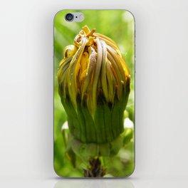 Dandy lion spring iPhone Skin