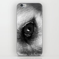 golden retriever iPhone & iPod Skins featuring Golden retriever eye by Isabelle Savard-Filteau