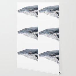 Humpback whale portrait Wallpaper