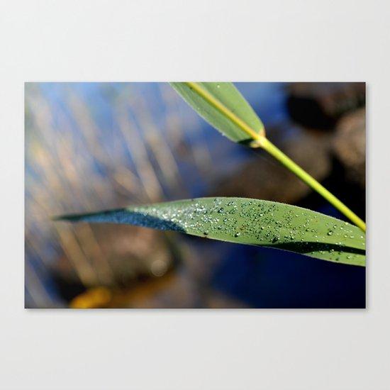 leaf with dew Canvas Print