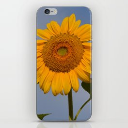 Sunny Sunflower iPhone Skin