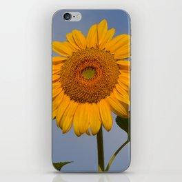 Sunny Sunflower iPhone Skin