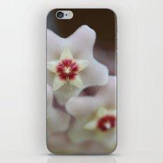 Hoya Flowers iPhone & iPod Skin