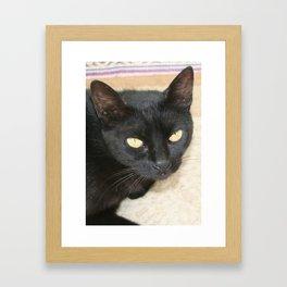 Beautiful Black Cat Portrait  Framed Art Print
