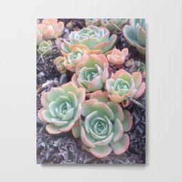 Californian Cacti Metal Print