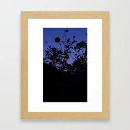 weeds and night sky Framed Art Print