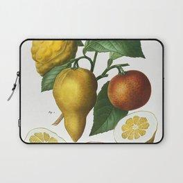 Bitter orange Citrus bigaradia bizarro from Traite des Arbres et Arbustes que lon cultive en France Laptop Sleeve