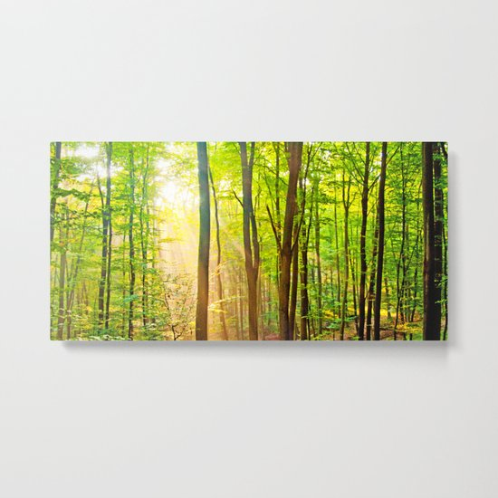 Sunbeams in the forest Metal Print