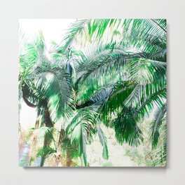 The wild shadow tropical palm tree green bright photography Metal Print