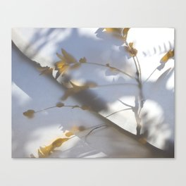 Veiled Nature 8 Canvas Print