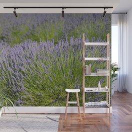 lavender field 2 Wall Mural